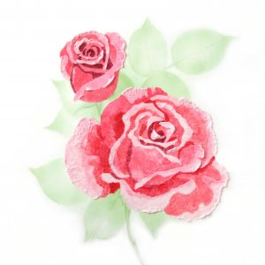 Rose Multi-Colour Stencil