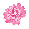 Small Vintage Peony Multi-Colour Stencil